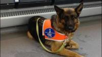La loi oblige tous les lieux recevant du public à accueillir les chiens guides d'aveugles