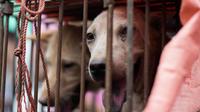 Pas moins de 10.000 chiens et 4.000 chats qui sont tués chaque année à l'occasion du festival de Yulin, en Chine.