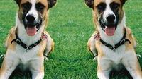 Il participe à un concours, et gagne un clone de son chien