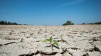 L'année écoulée se classe deuxième, à seulement 0,04°C derrière 2016, qui reste l'année la plus chaude.