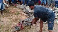 Les habitants de Sorong ont abattu 292 crocodiles, pour l'essentiel des bébés crocodiles, mais aussi des adultes mesurant deux mètres de long.