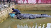L'animal est long de 4,4 mètres et pèse quelque 600 kilogrammes.