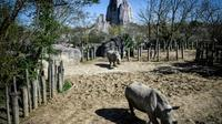 Des rhinoceros au Parc Zoologique de Paris en avril 2018 [STEPHANE DE SAKUTIN / AFP/Archives]