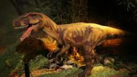 L'espèce retrouvée a vécu il y a 200 millions d'années.