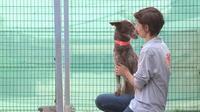 """La SPA lance un """"SOS adoption"""""""