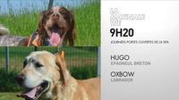 Les chiens de la SPA chez Cnews