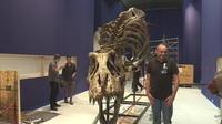 Un T-Rex débarque à Paris