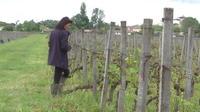Intempéries : l'Etat au secours des viticulteurs