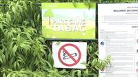Strasbourg : fumer dans les parcs interdit dès le 1er juillet
