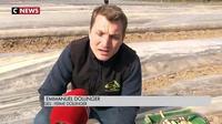 Alsace : la récolte des asperges en avance cette année