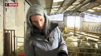 Moselle : chèvres angora et féminisation de l'agriculture