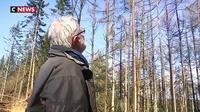 Un champignon ravage des arbres en Bretagne