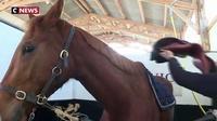 Les chevaux de courses réformés ont une seconde chance