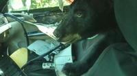 Colorado : Un ours détruit l?intérieur d?une voiture qui n?était pas verrouillée