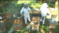 Aide de 3 millions d?euros : les apiculteurs « très dubitatifs »