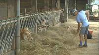 Canicule : les agriculteurs en Mayenne inquiets