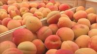 Les fruits ont perdu leur goût