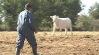 Sécheresse : les agriculteurs pris au piège