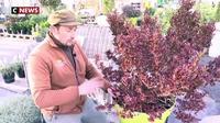 Les conseils pour protéger ses plantes du froid