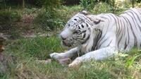 Italie : les animaux subissent aussi la canicule