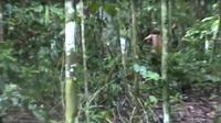 Amazonie : un survivant aborigène découvert dans la forêt brésilienne