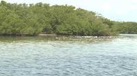 Floride : une marée noire décime la population aquatique