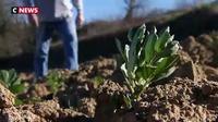 L'Occitanie à la pointe de l'agriculture biologique