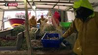 Brexit : les pêcheurs français redoutent une guerre commerciale