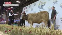 Victoire des viandes racées : le salon de l'Agriculture couronne son gagnant