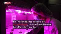 Thaïlande : le cannabis médical testé sur des patients en cancérologie