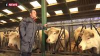 Viande avariée polonaise : la colère des éleveurs français