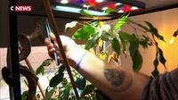 Le Terra Spot : le nouveau bar dédié aux reptiles