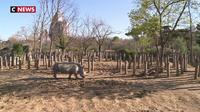 Au parc zoologique de Paris on soigne les animaux par le jeu