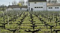 Un vignoble près d'une école de Villeneuve, près de Bordeaux, le 23 mars 2016 [GEORGES GOBET / AFP/Archives]