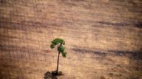 De Madagascar à l'Amazonie et jusque dans les Grandes plaines américaines, le dérèglement climatique pourrait menacer entre un quart et la moitié des espèces d'ici à 2080 dans 33 régions du monde parmi les plus riches en biodiversité, selon un rapport [RAPHAEL ALVES / AFP/Archives]