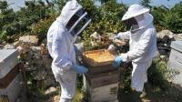 Le projet de loi adopté interdit les pesticides tueurs d'abeilles à partir de 2018 [FRED TANNEAU / AFP/Archives]