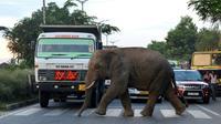 Un éléphant traverse une route à Baragoan, dans l'État indien du Guwahati, le 9 août 2018 [Biju BORO / AFP/Archives]