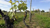 En 2012, 12 millions de personnes ont visité une entreprise, dont celles de l'alimentaire (vins et spiritueux compris), largement en tête, en ont attiré plus de la moitié.  [Thierry Zoccolan / AFP/Archives]