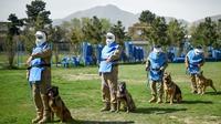 Des maîtres-chiens afghans dressent des chiens au déminage, le 7 avril 2019 au Centre de détections des mines (MDC) à Kaboul  [WAKIL KOHSAR / AFP]