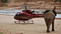 Un éléphant s'approche d'un hélicoptère dans la réserve de Samburu, au Kenya, le 15 septembre 2015 [PETER MARTEL / AFP]