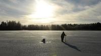 la Finlande qui possède la meilleure qualité de l'air au monde, avec environ six microgrammes de polluants par mètre cube.