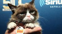 Grumpy Cat était une célébrité sur Internet.