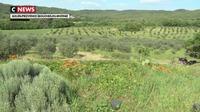 Bouches-du-Rhône : les agriculteurs à la conquête des pistachiers