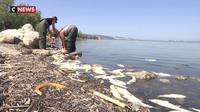 Canicule : des poissons asphyxiés