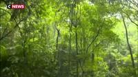 La réserve naturelle de Dinghushan, berceau de la prise de conscience écologique chinoise