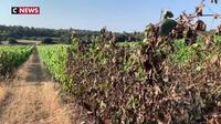 Une vague de sécheresse frape une partie de la France