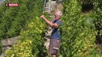 La Suisse : un producteur de vin