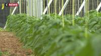 Espagne : des insectes pour remplacer les pesticides