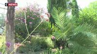 La canicule menace le jardin botanique de Lyon