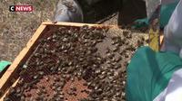 La canicule touche aussi les abeilles